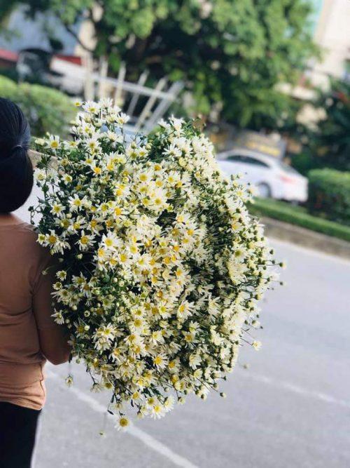 hoa thanh thảo