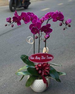 hoa lan hồ điệp 06