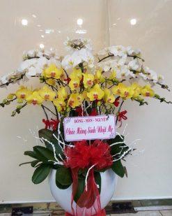 hoa lan hồ điệp 09