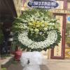 hoa tang lễ 71