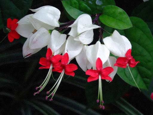 bông hoa ngọc nữ