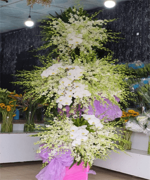 hoa tang lễ htl 72
