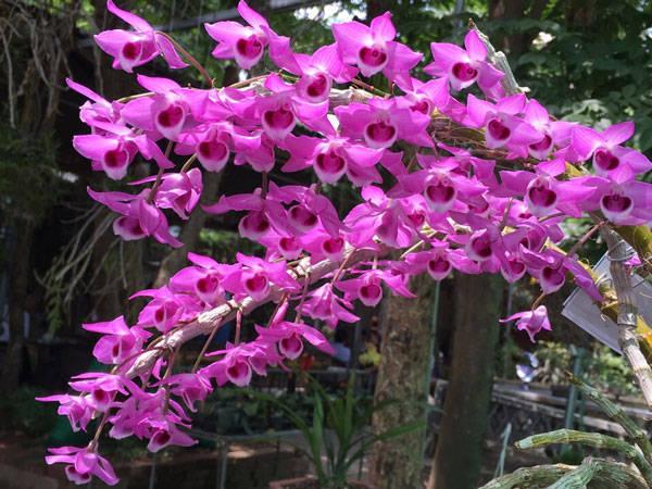 Bông hoa lan tím