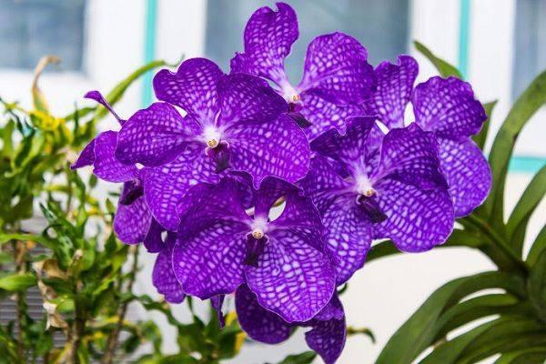 hình ảnh hoa tím đẹp nhất